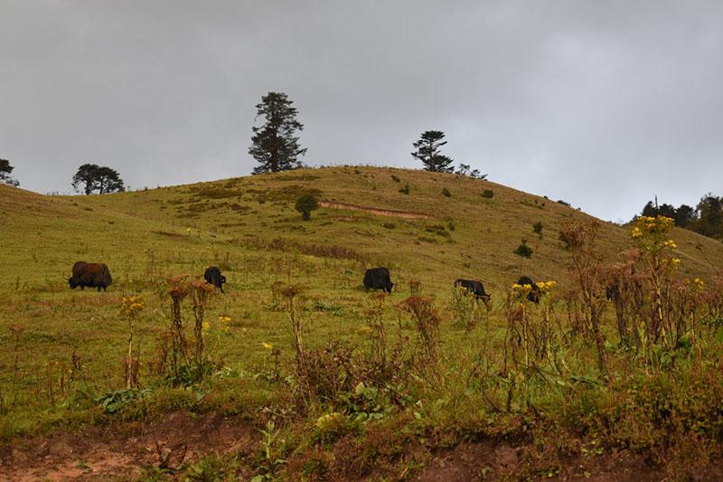kolkata-to-bhutan-road-trip-9.JPG