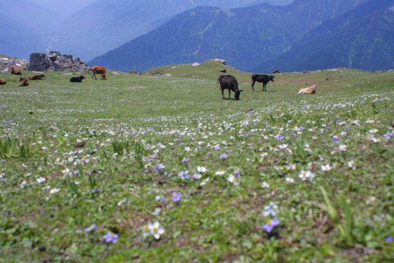 rani-sui-lake-trek-30.jpg