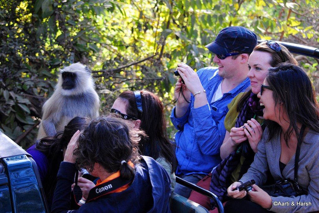 safari-in-ranthambore-national-park-4.JPG