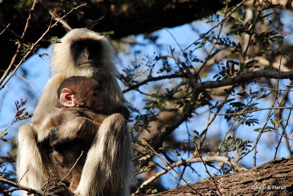safari-in-ranthambore-national-park-5.JPG