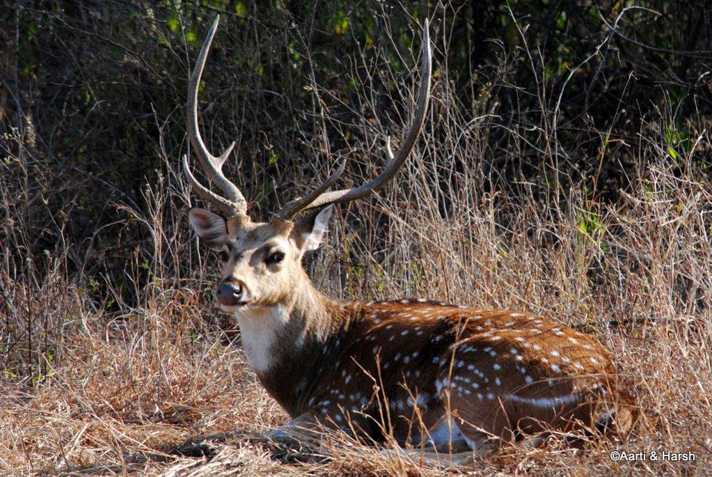 safari-in-ranthambore-national-park-6.jpg