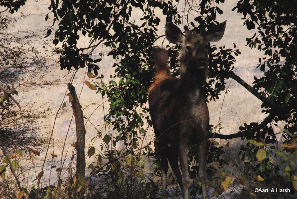 safari-in-ranthambore-national-park-10.JPG