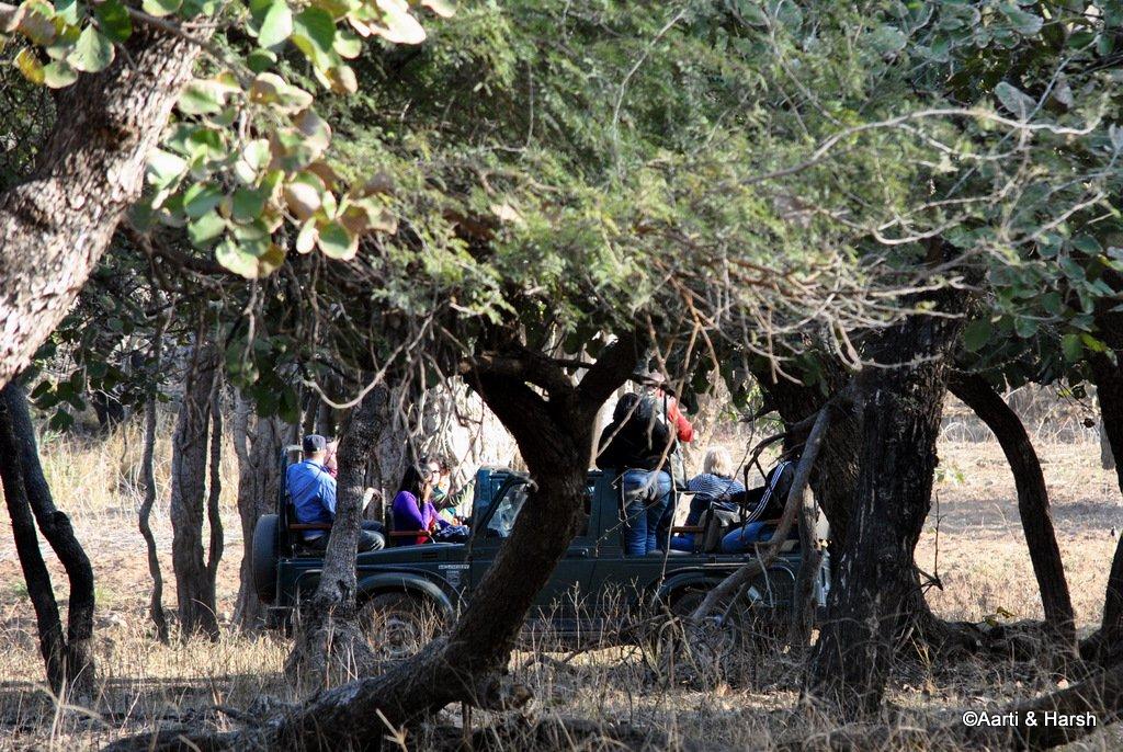 safari-in-ranthambore-national-park-11.JPG