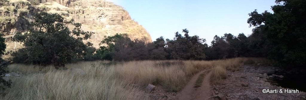 safari-in-ranthambore-national-park-14.JPG