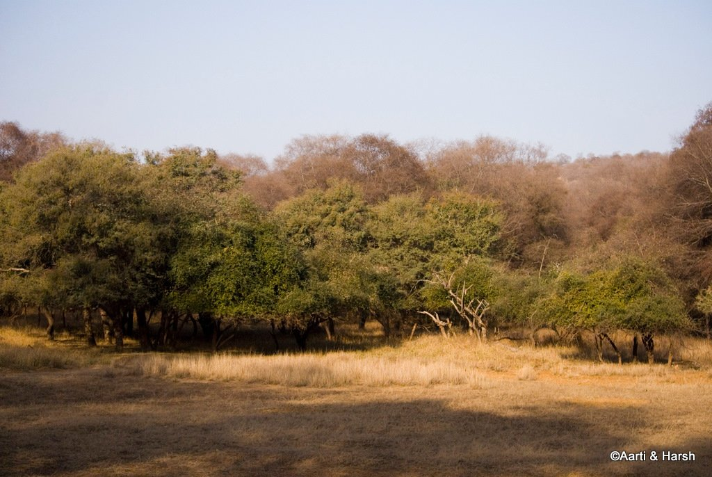 tiger-sighting-in-ranthambore-5.jpg