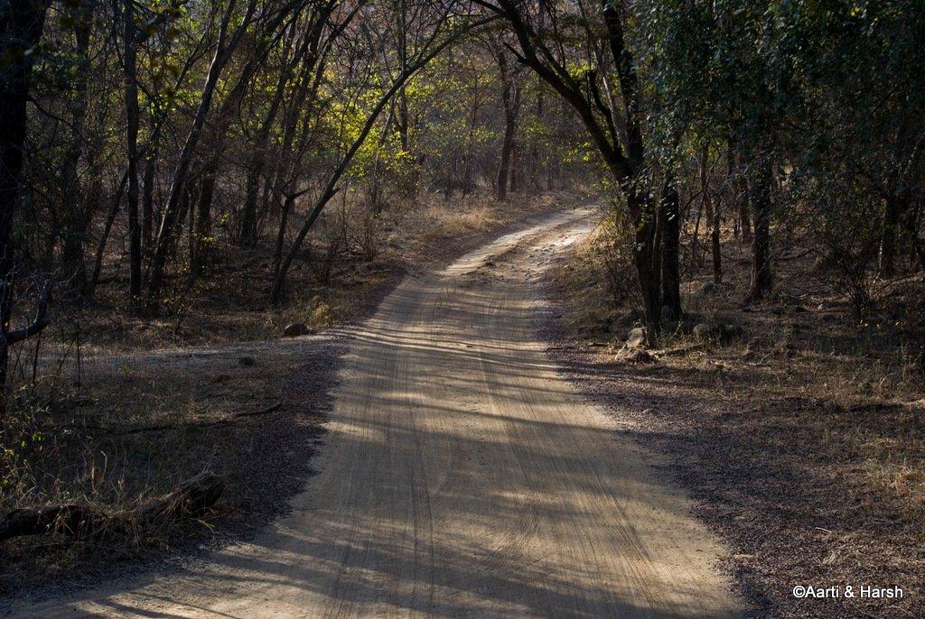 tiger-sighting-in-ranthambore-7.jpg