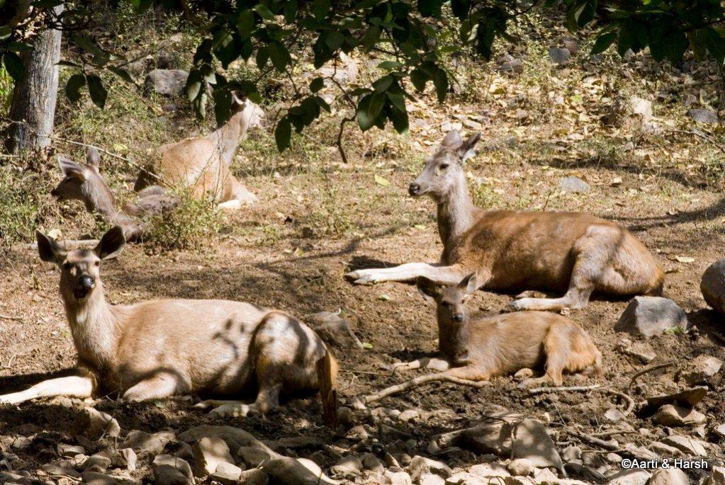 ranthambore-tiger-reserve-5.jpg