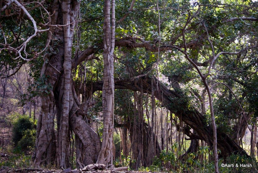 ranthambore-tiger-reserve-18.jpg