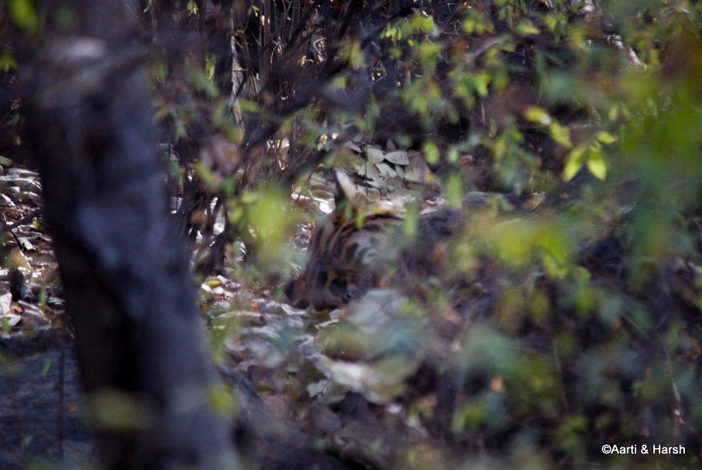 ranthambore-tiger-reserve-19.jpg