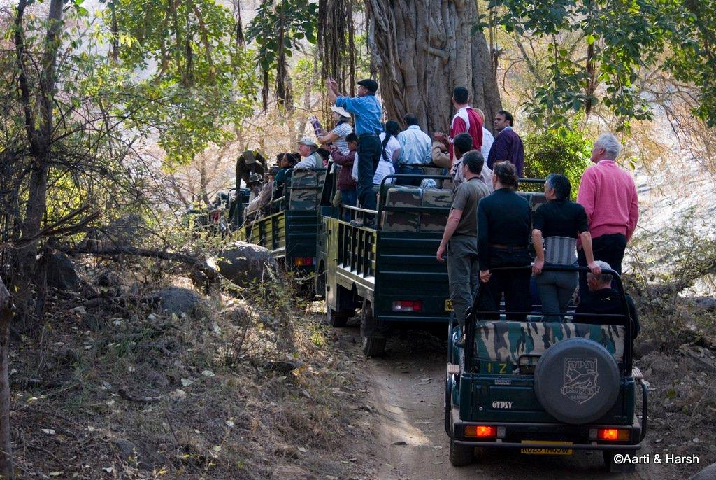 ranthambore-tiger-reserve-20.jpg