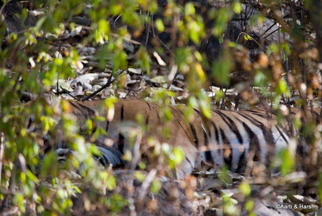 ranthambore-tiger-reserve-21.jpg