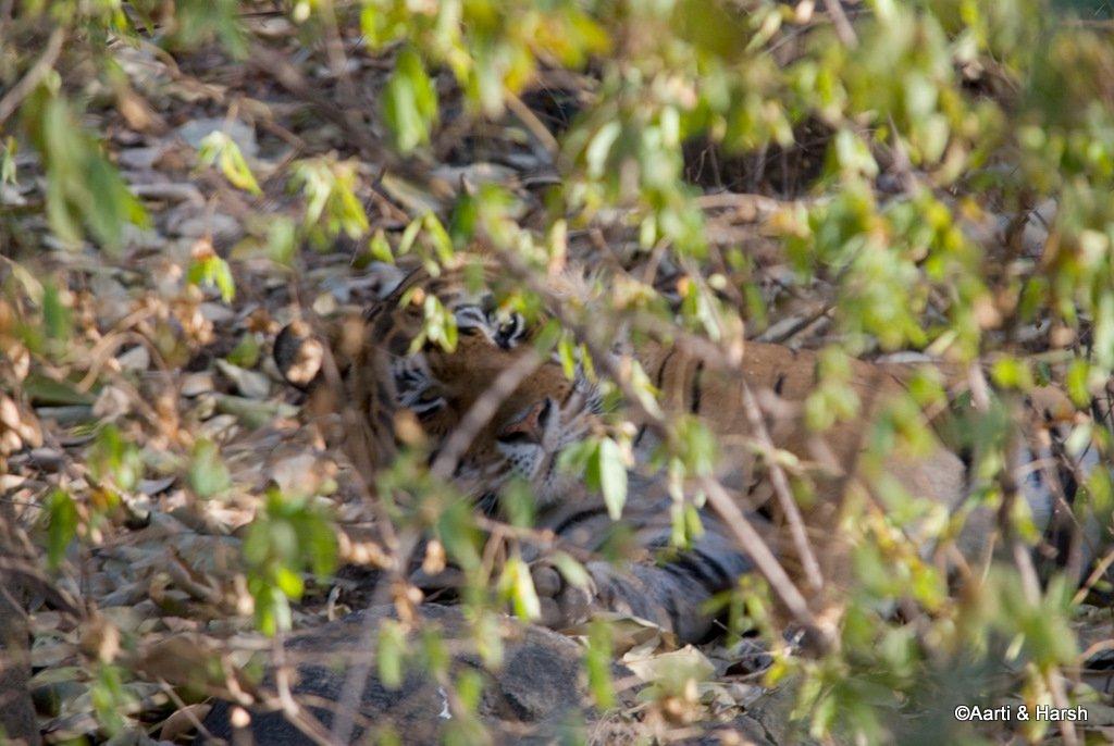 ranthambore-tiger-reserve-22.jpg
