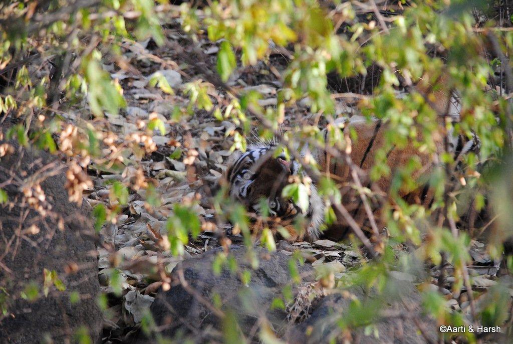ranthambore-tiger-reserve-25.jpg