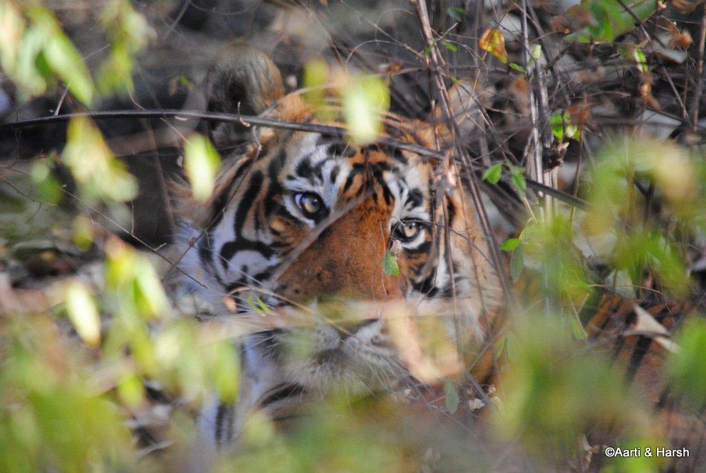 ranthambore-tiger-reserve-26.jpg