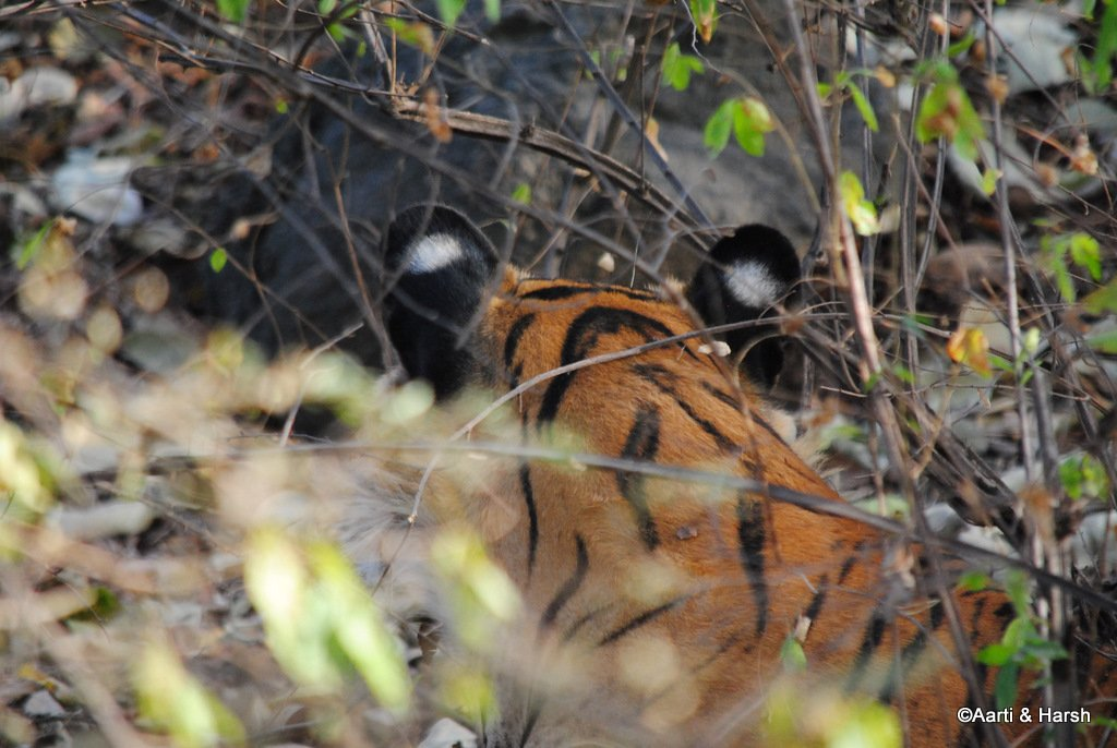 ranthambore-tiger-reserve-27.jpg