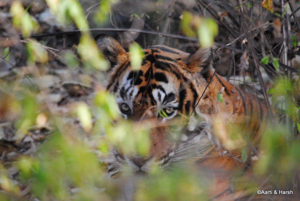 ranthambore-tiger-reserve-28.jpg