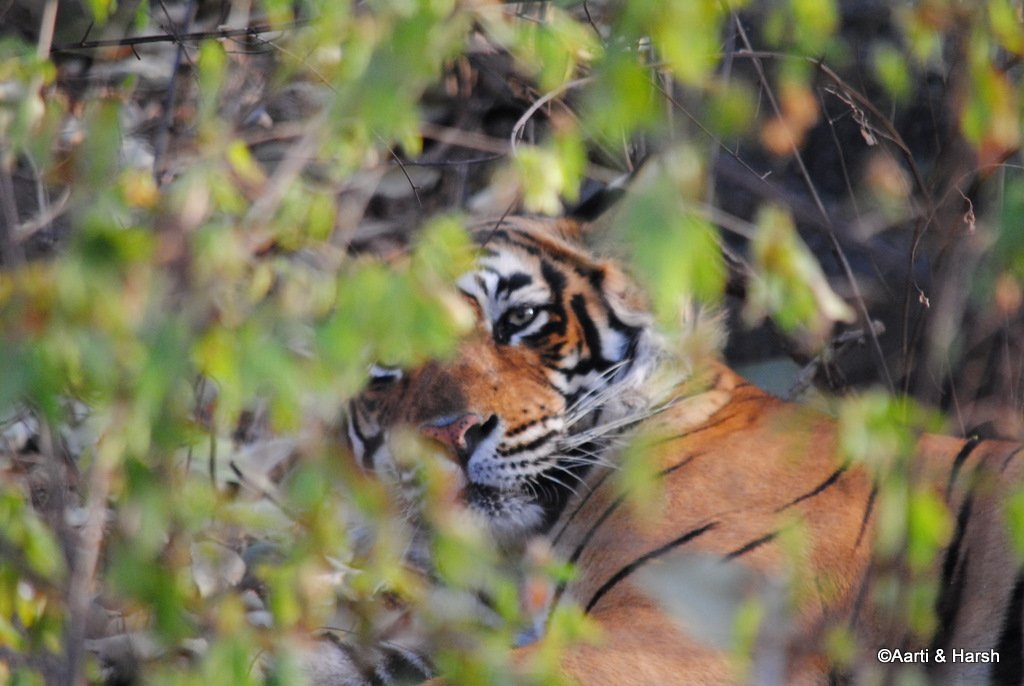 ranthambore-tiger-reserve-29.jpg