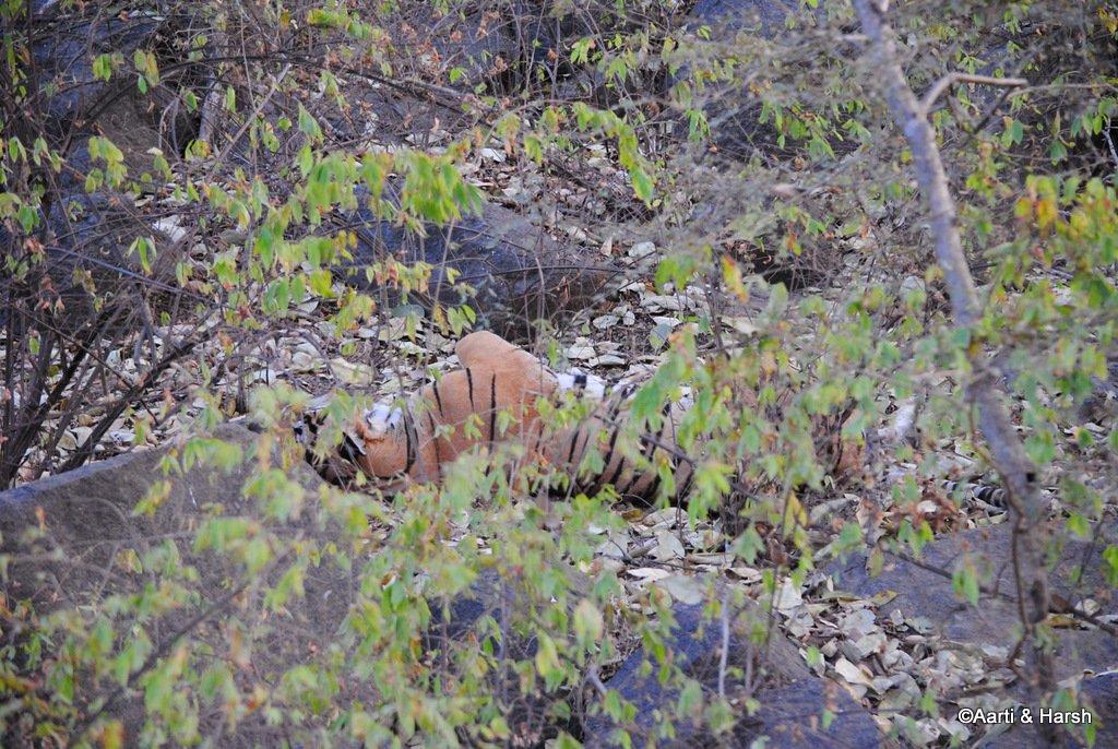 ranthambore-tiger-reserve-30.jpg