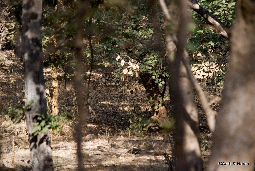 ranthambore-tiger-safari-11.jpg