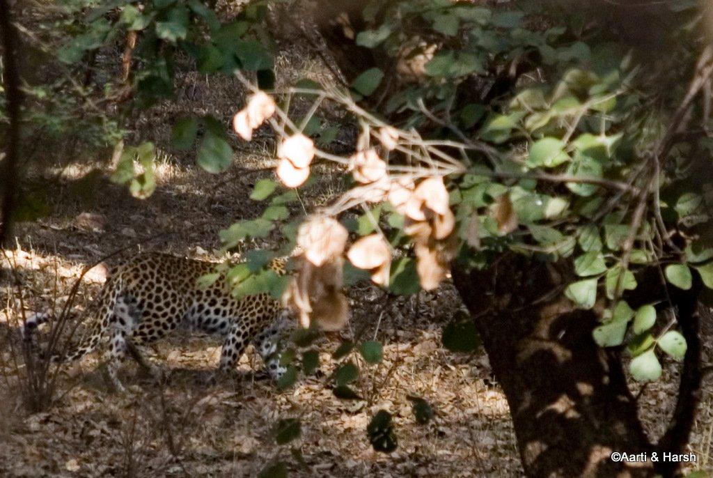 ranthambore-tiger-safari-12.jpg
