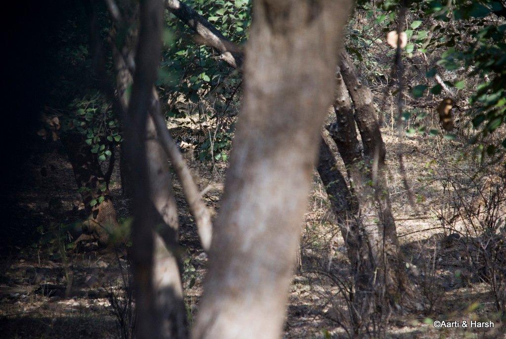 ranthambore-tiger-safari-13.jpg