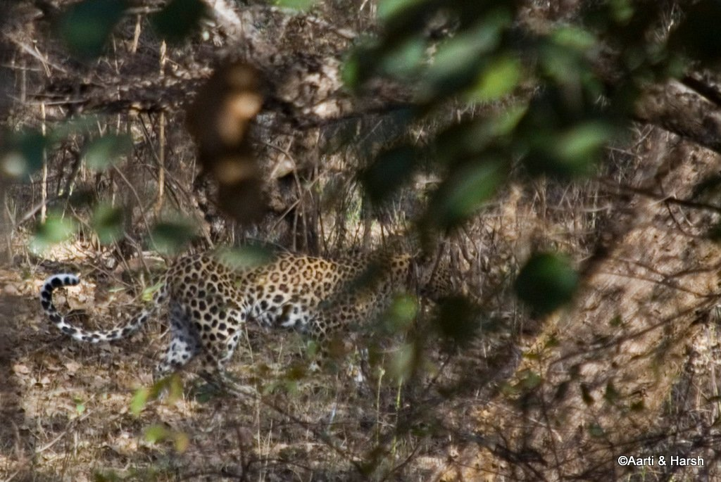 ranthambore-tiger-safari-14.jpg