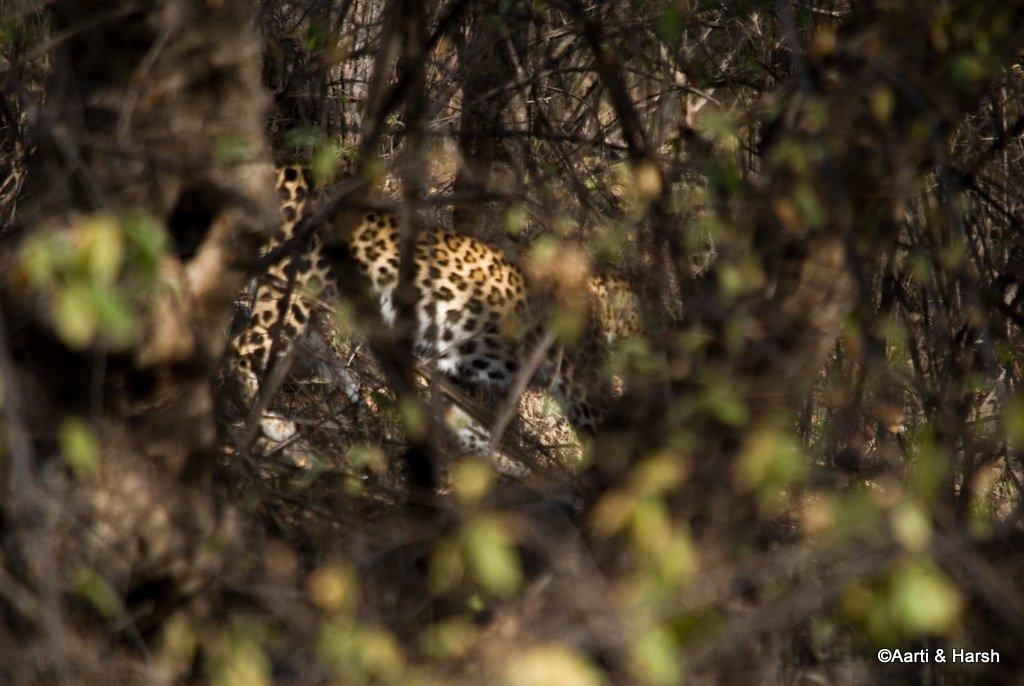ranthambore-tiger-safari-15.jpg