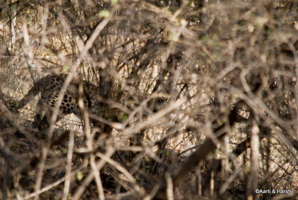 ranthambore-tiger-safari-16.jpg