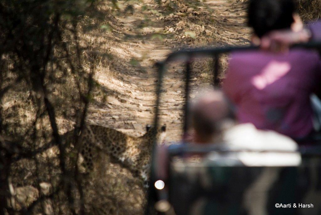ranthambore-tiger-safari-17.jpg