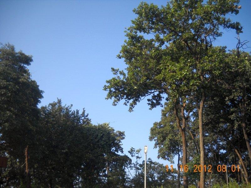 saranda-forest-reserve-46.jpg
