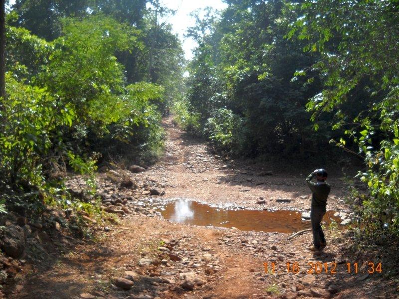 saranda-forest-reserve-52.jpg