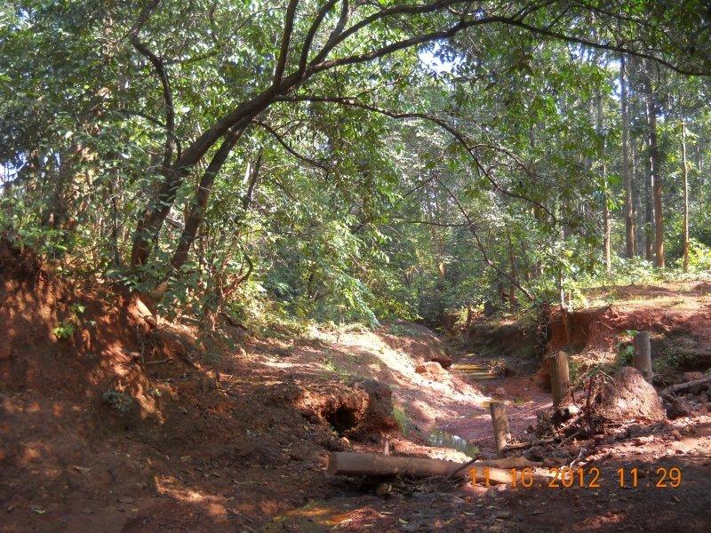 saranda-forest-reserve-53.jpg