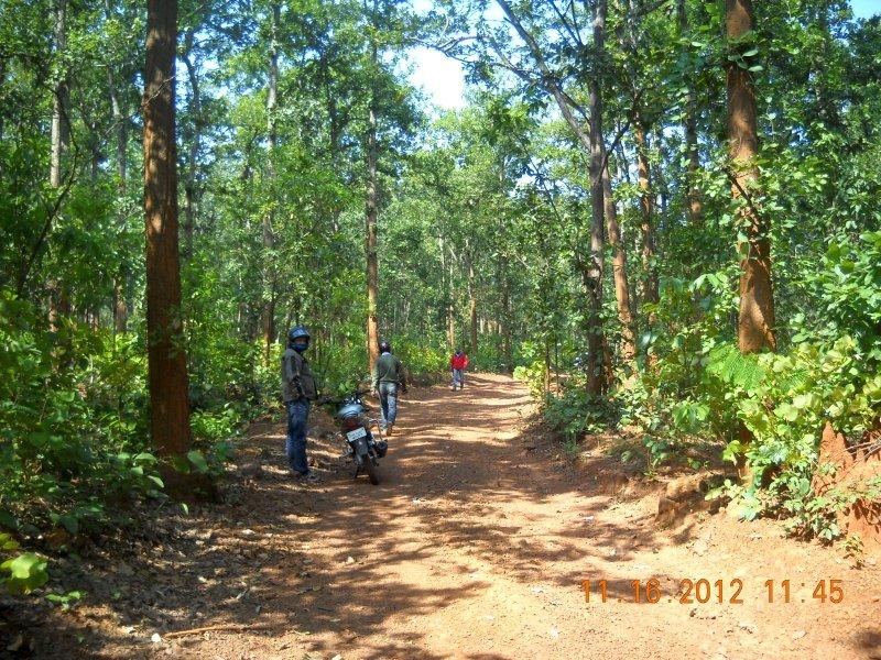 saranda-forest-reserve-63.jpg