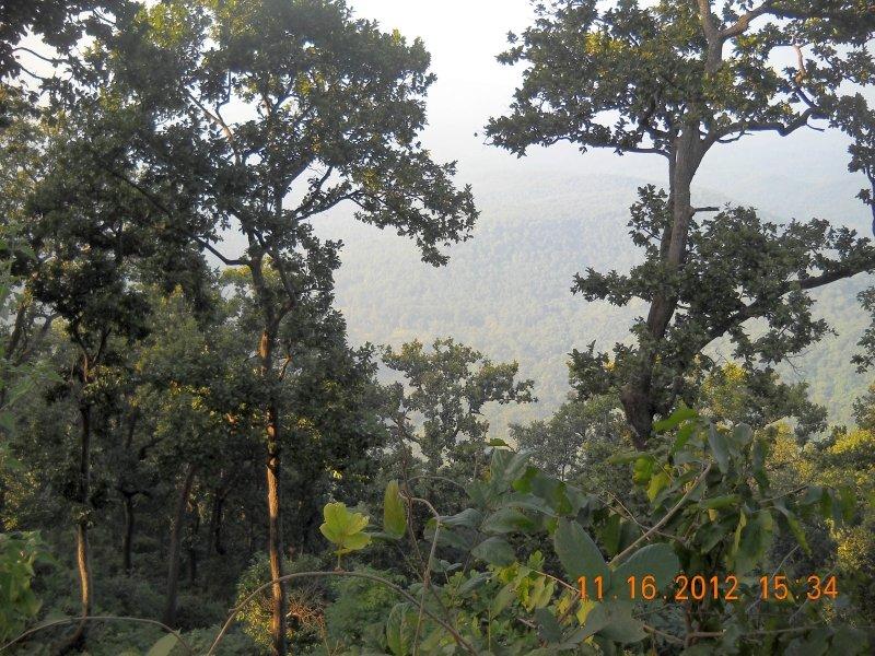 saranda-forest-reserve-69.jpg