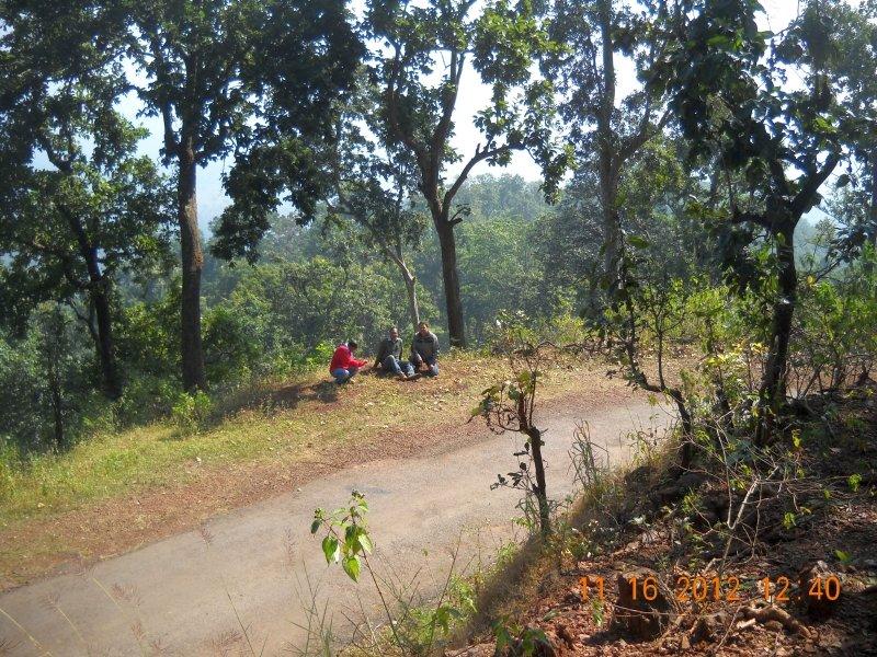 saranda-forest-reserve-71.jpg