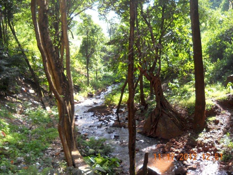 saranda-forest-reserve-91.jpg