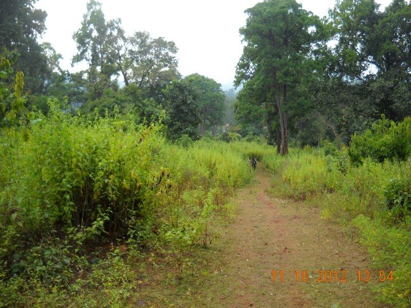 saranda-forest-reserve-117.jpg